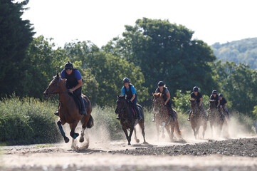 Racing horses exercise on deep sand gallops at Lawney Hill Racing stables in Aston Rowant