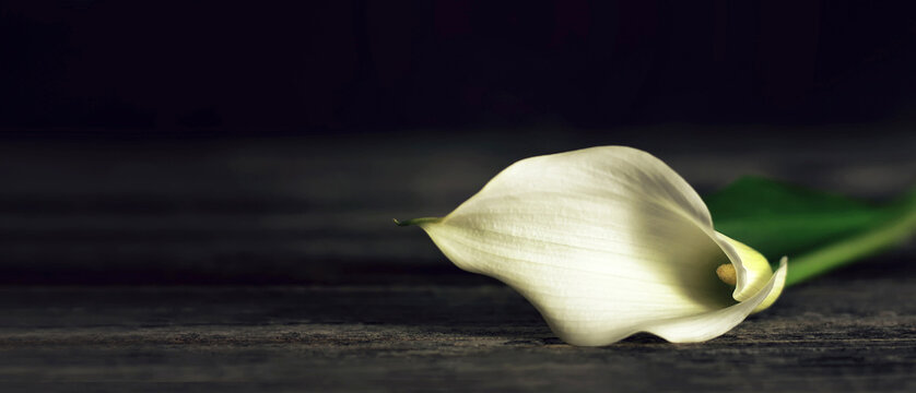 Sympathy card with calla lily on dark wooden background with copy space