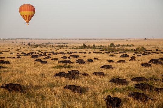Tanzania, Serengeti Savannah