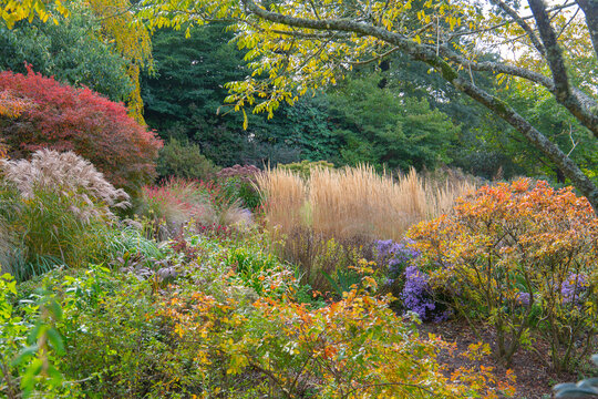 woodland background set alight with a mixture of grasses, acers, shrubs and perennial flowers