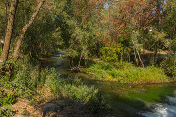 krajobraz rzeka  las drzewa liście woda lato natura  zieleń trawa - fototapety na wymiar