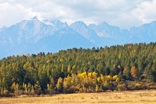 Beautiful autumn landscape with yellowed trees in the forest of a foothill valley and snow-capped mountain peaks. Eastern Sayans, Baikal region, Buryatia, Tunka valley