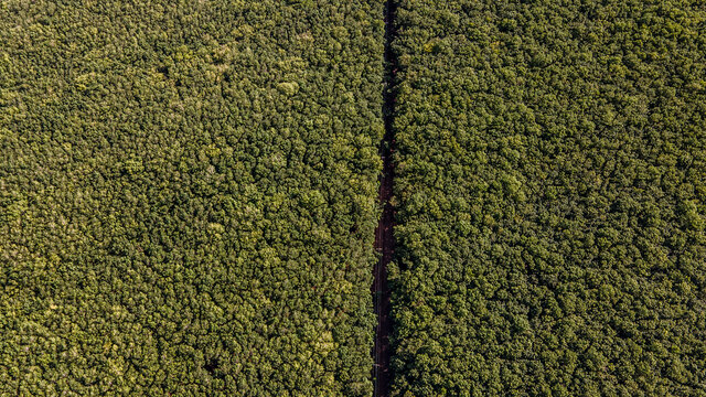 Rubber plantation by drone, Kampong Cham province, Cambodia