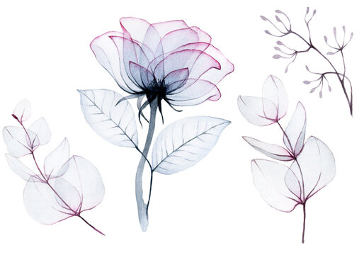 watercolor drawing, set of transparent rose flowers and eucalyptus leaves bedding colors pink, blue, gray. isolated on white. transparent flowers, x-ray. design for weddings, cards, invitations