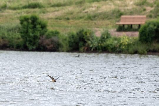 Birds flying over Sandy Wool Lake in Milpitas, California