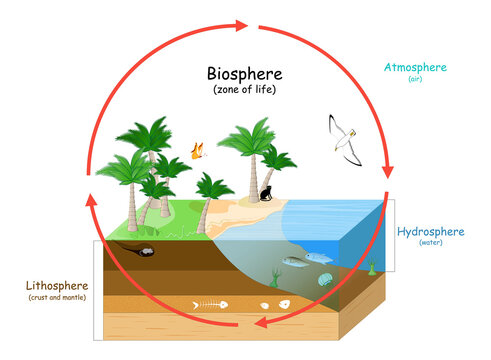 Biosphere. natural ecosystems with wildlife