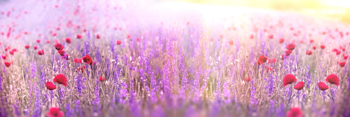 Flowering purple flower and poppy flower in meadow, beautiful landscape, nature in spring