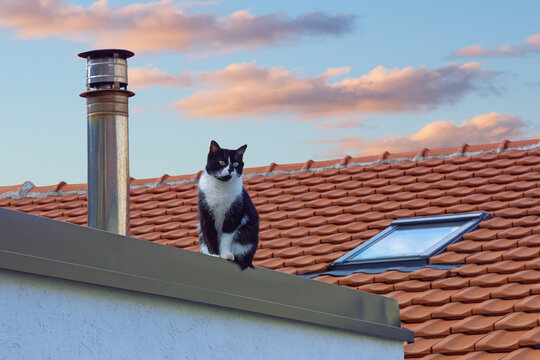 Sad homeless cat sits on roof of house at sunset