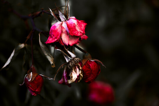 - abandoned beauty -