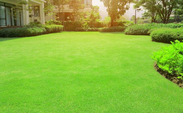 Green grass lawn in backyard outdoor garden