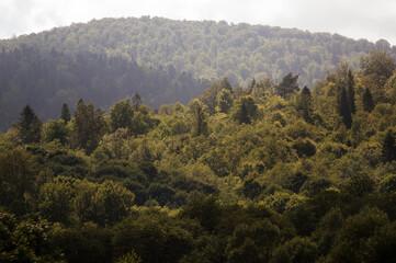 Fototapeta Las wierzchołki drzew z dalekiej perspektywy obraz