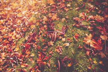 Wall Mural - multicolored leaves on the grass in the park