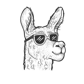 llama in sunglasses sketch vector illustration