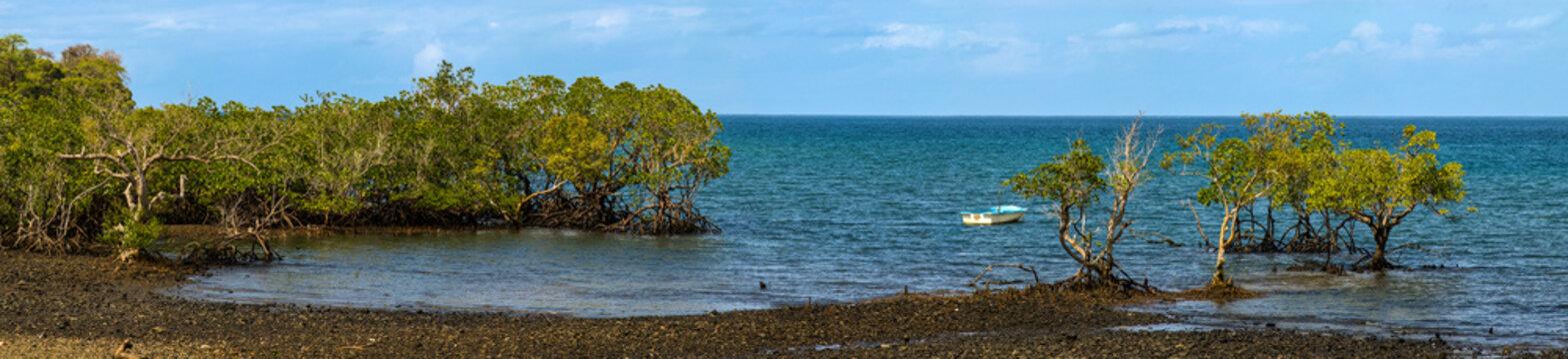 Panorama d'une mangrove de l'île de Grande Terre - Mayotte