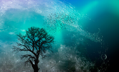 Wall Mural - Beautiful landscape with lone tree  full moon and aurora in the background