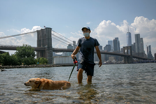 A man cools off with his dog in the East River on a hot summer day in Brooklyn Bridge Park in the Brooklyn, New York