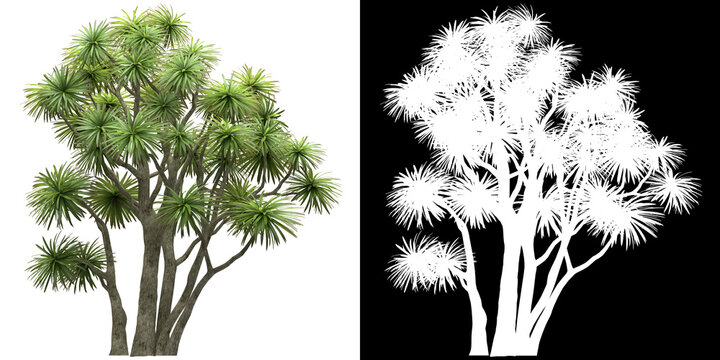Front view of tree (Cordyline Australis) png with alpha channel to cutout 3D rendering. For forest and nature compositing.