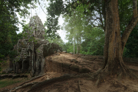 Low angle of wonderful scenery of aged Buddhist temple covered with huge tree roots and located in jungles in Cambodia
