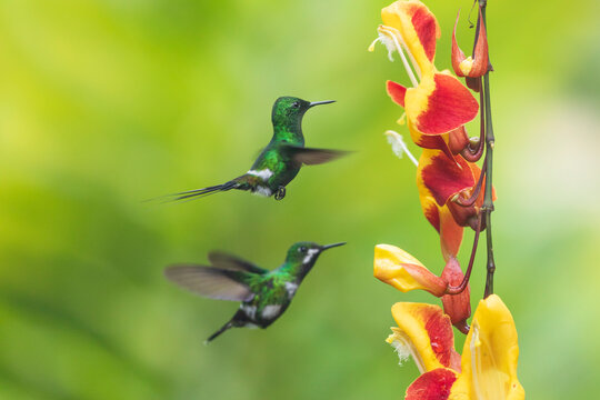 Wonderful green birds on flower