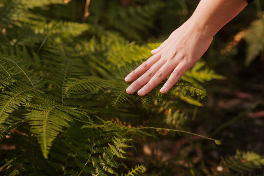 Unrecognizable female strolling and touching fern leaf growing in woods on sunny day