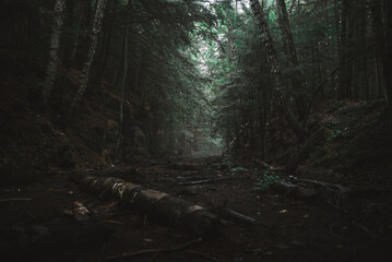 Gloomy forest landscape with old logs on narrow path leading among dense green trees growing in Algonquin Provincial Park in Canada