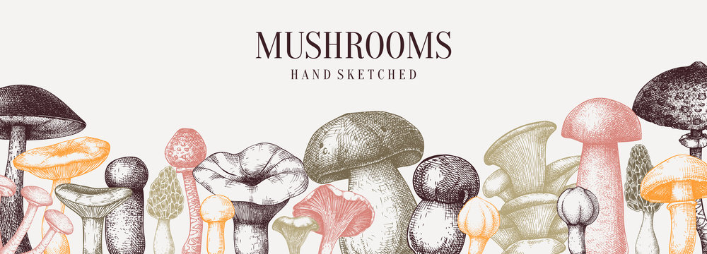 Vintage mushrooms banner. Edible mushrooms vector background. Hand drawn food drawings. Forest plant sketches.