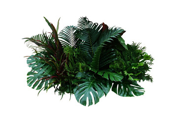 Tropical foliage plant bush (Monstera, palm leaves, Calathea, Cordyline or Hawaiian Ti plant, ferns, and fir) floral arrangement indoors garden nature backdrop isolated on white with clipping path.