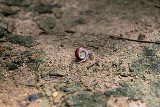 Bernard-l'hermite, pagure sur la plage