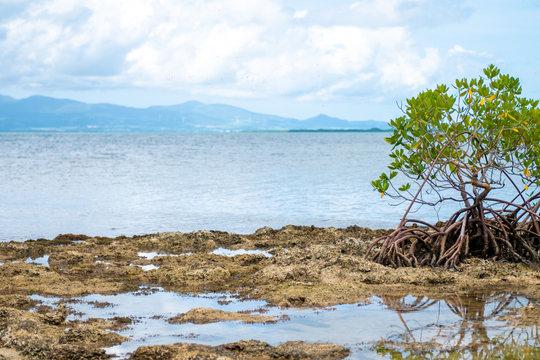 Île et horizon, Guadeloupe