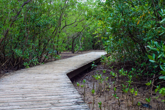 Pont en bois dans la nature