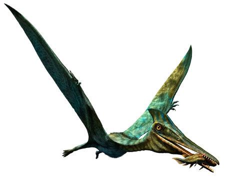 Pterodactylus prehistoric dinosaur 3D illustration