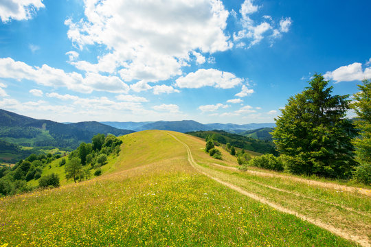 rural landscape on a summer day. dirt road in the grassy fields and rolling hills. fluffy clouds on a blue sky beautiful scenery of mountainous carpathian countryside