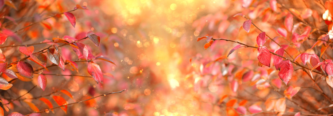 Photo sur Plexiglas Automne bright autumn nature background with red fall leaves. autumn season concept. banner
