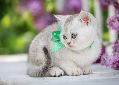 kitten in the garden
