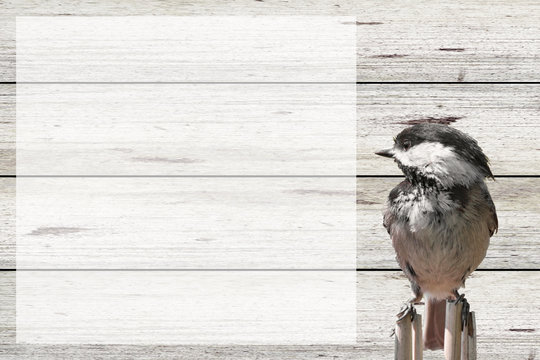 bird and barn wood background with room for words and dates