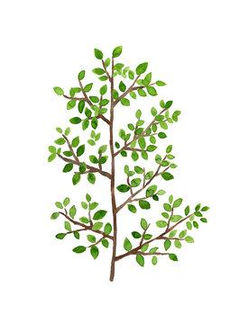 緑の葉っぱがついた木の枝 水彩イラスト