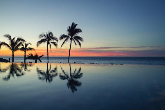palm trees reflect at a beach resort