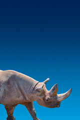Cover page with portrait of huge African rhino with a big horn at blue gradient background aka blue sky in Africa with copy space for text