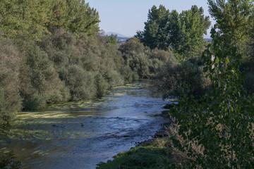 krajobraz rzeka las drzewa liście woda lato natura trawa zieleń