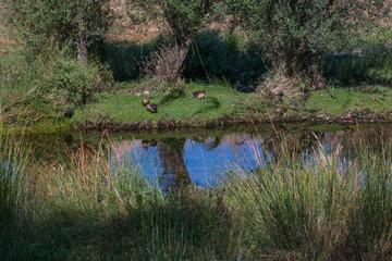 krajobraz rzeka las drzewa liście woda lato natura trawa - fototapety na wymiar