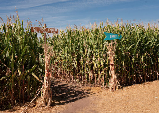 Enter Sign into Corn Maze in the Fall