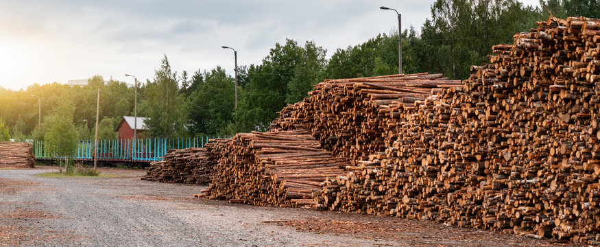 Stock of timber. Timber industry