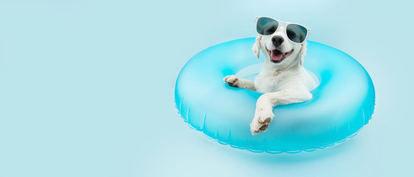 puppy dog summer inside of a blue inflatable wearing sunglasses.