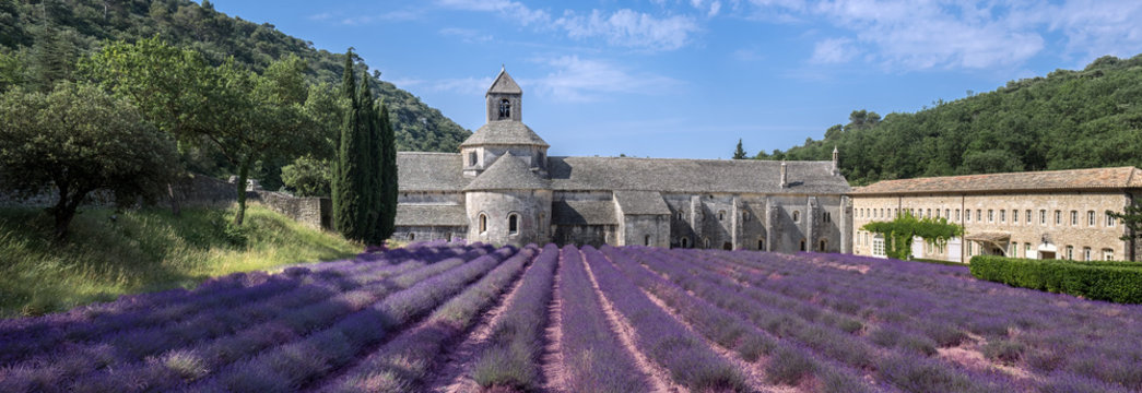 Large panoramic view of lavender field at ancient monastery Abbey of Senanque. Vaucluse, Provence region. France