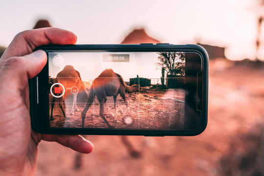 man taking pictures of camels