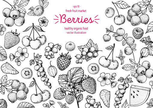 Berries drawing collection. Hand drawn berry sketch. Vector illustration. Food design template with berry. Blueberries, strawberries, cherries, currants, cranberries, gooseberries, raspberries