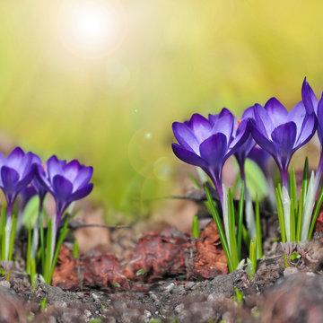 light purple flower summer flowers and green leaf tropical pattern on blue sky.