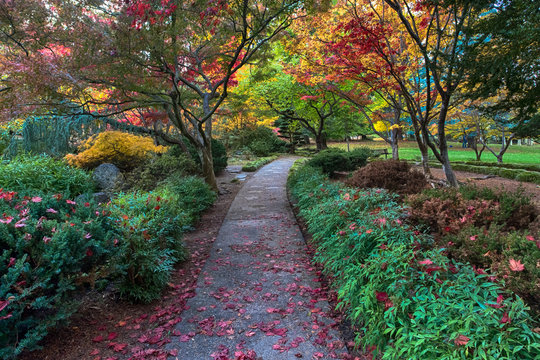 Japanese garden bright autumn colors. Lithia park, Ashland, Oregon