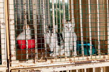 Kittens look through the bars of the animal shelter, they look very unhappy.