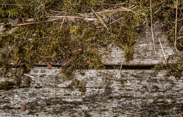 Moss on wooden planks of a bridge